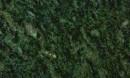 Korrado-verde maricata