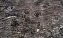 Korrado-forest black